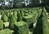 Ландшафтный дизайн - посадка растений