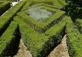 Декоративная стрижка растений